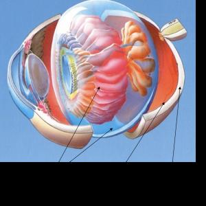 Esquema de la anatomía del vítreo